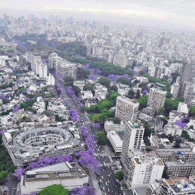 Traducir Japón: Blog de Alberto Silva: Hanami en Buenos Aires