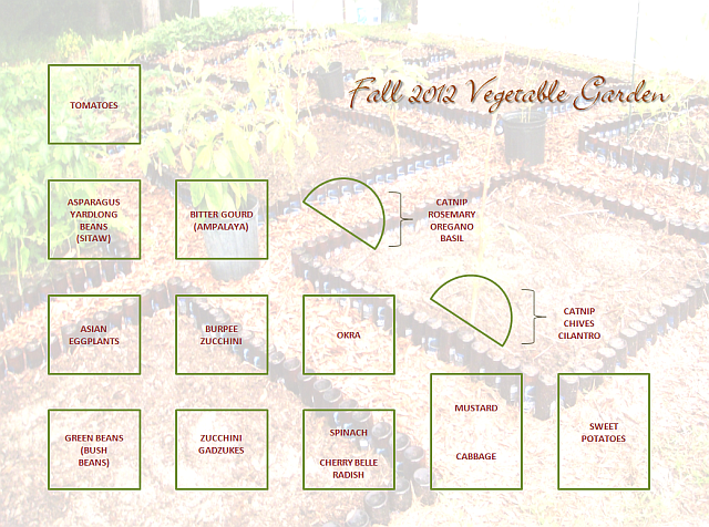 Itsybitsyfarm fall 2012 central florida vegetable garden - South florida vegetable gardening ...