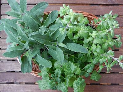 Salvia, oregano, melisa