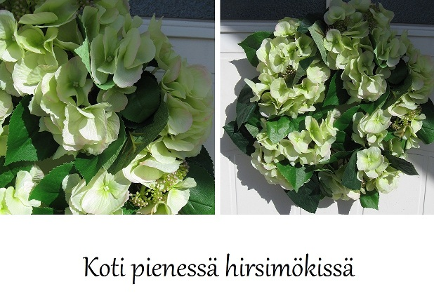 Koti pieness hirsimkiss