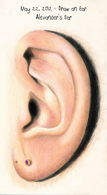 Ear drawing by © Ana Tirolese