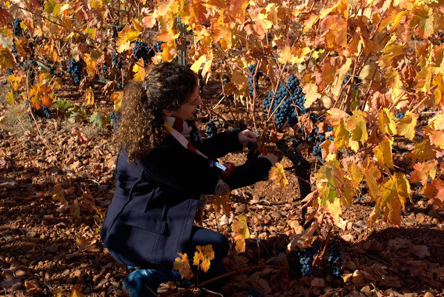 wine harvest festival autumn fall leaves grapes