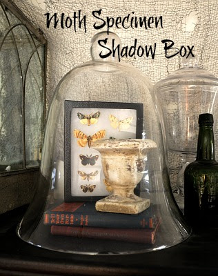 How to Make a Moth Shadow Box