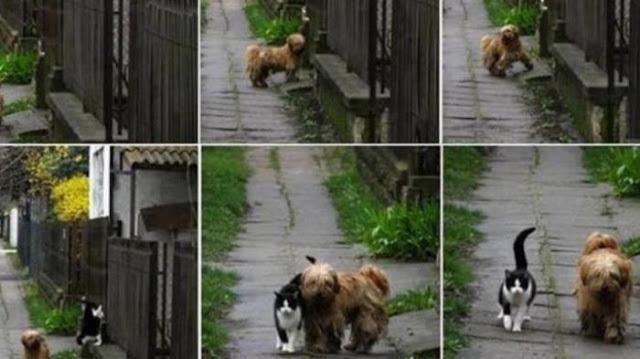 Unik, Anjing dan Kucing Ini Selalu Bertemu dan Bermain Bersama