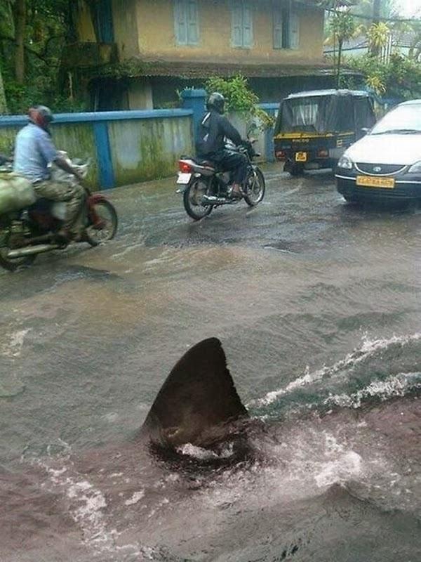 hiu di jalan