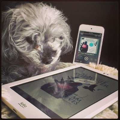 A fluffy grey poodle, Murchie, lays on a fuzzy, cream-coloured pillow. Immediately before him sits a white e-reader with The Dream Thieves' cover art on its screen. The angle and some reflections partly obscure it, but a dark silhouette with pink flames on its chest is visible. Behind Murchie sits a white iPod with the same image on its screen.