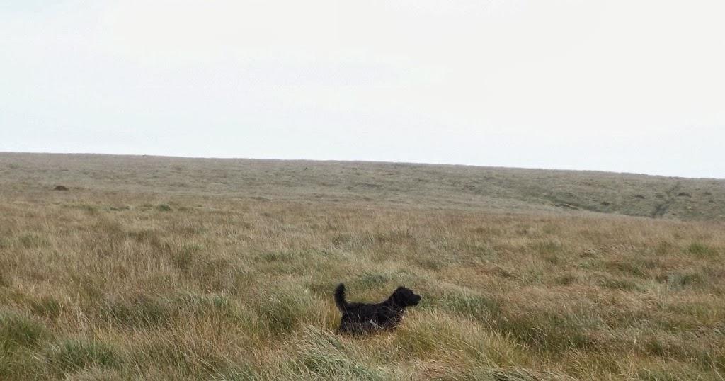 Image Result For Paradise Dog Training