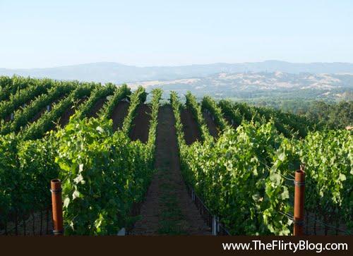 Afternoon, Baker Ridge, Pinot Grapes Vineyard