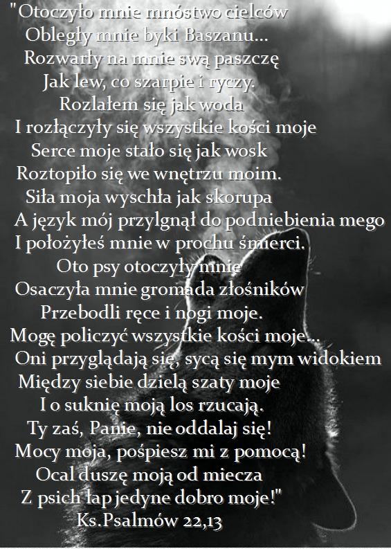 Najciekawsze wersety biblijne... Stylowi_pl_zwierzeta_36828338%255B1%255D_Fotor
