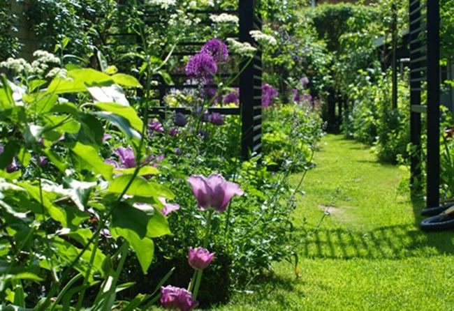 Smukke staudebede i blå og lilla farver i den moderne have med sorte konstruktioner