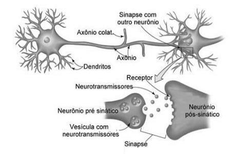 quanto tempo dura a paixão e o amor incontrolável neurotransmissores são substâncias químicas liberadas pelos neurônios no cérebro