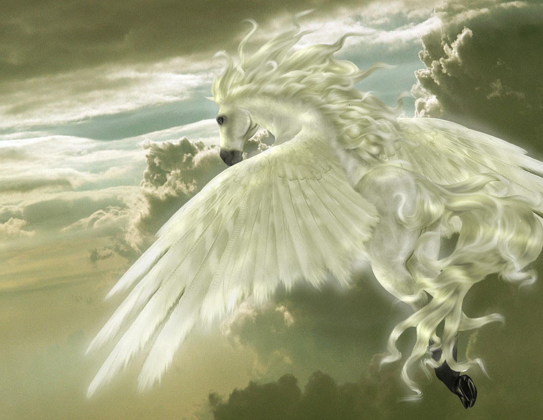 Ca Amp 199adora De Imagens Pegasus