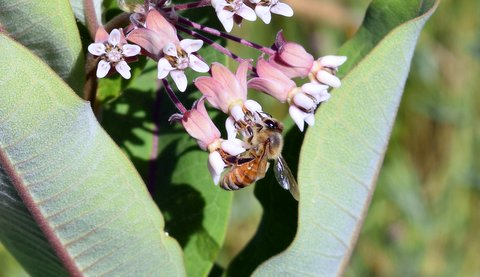 Portage Library to host Keweenaw Garden Club presentation on beekeeping Nov. 20