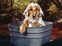 Como fazer meu cão a não sujar a casa?