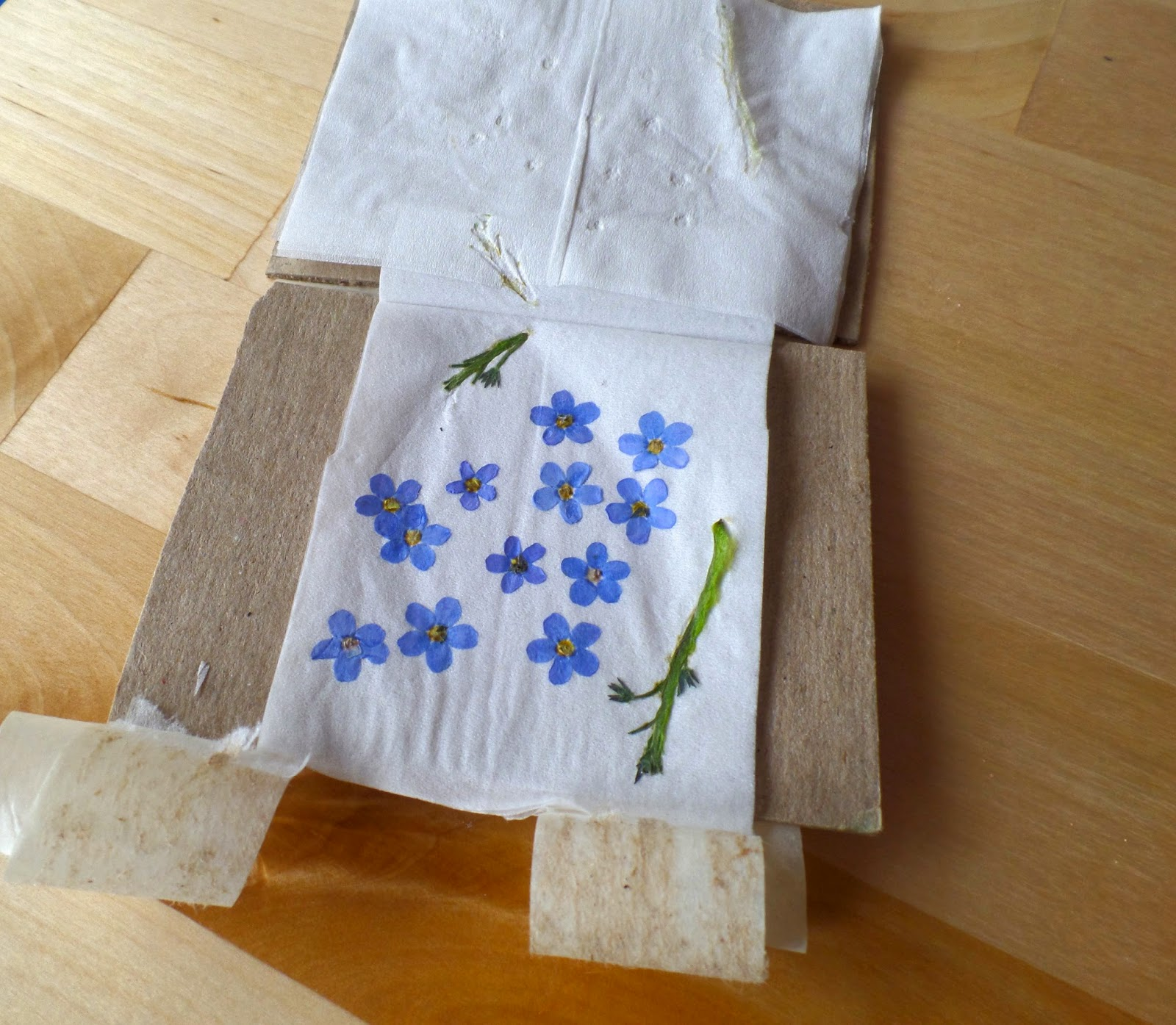 dried forget-me-knot flowers