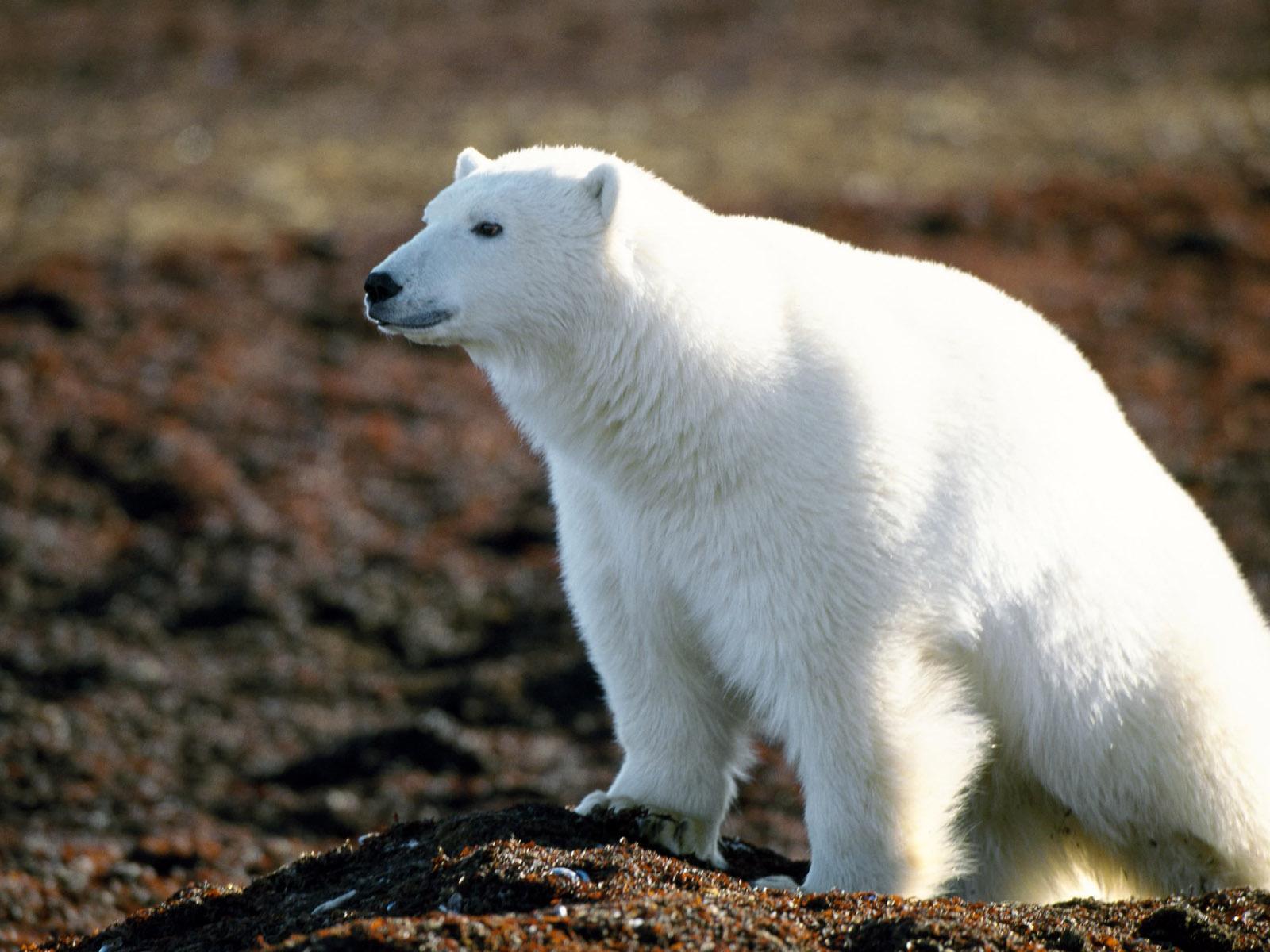 http://4.bp.blogspot.com/-Q6xkWlwYaAU/TvYYxQmchBI/AAAAAAAAGIs/C7NswskBv_U/s1600/animals-wallpapers-41.jpg