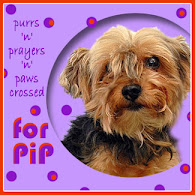 Please Pray For Mr.Pip!