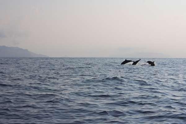 Ingin Melihat Lumba-Lumba Dilautan Lepas Datanglah ke Pulau Mare Maluku