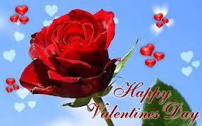 صورة وردة حمراء هابي فالنتين