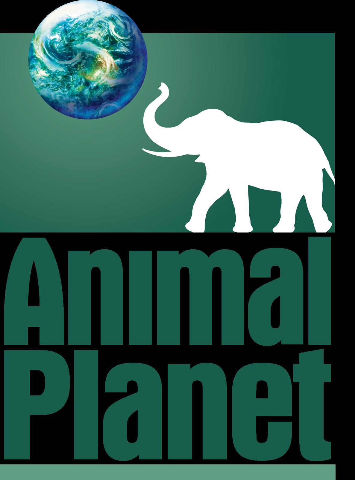 Animal planet cambio de logo todo marketing for Pool show animal planet