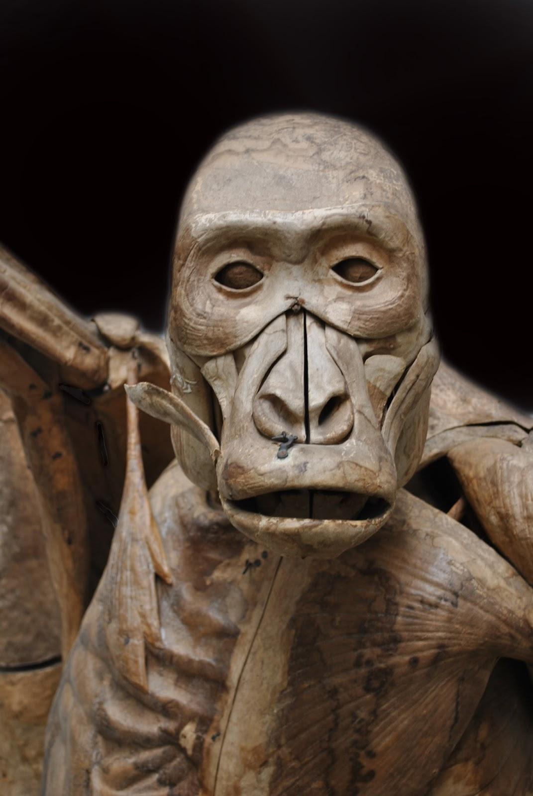 dextrangis: el gorila de auzoux