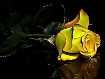 Cool Yellow Rose Wallpapers