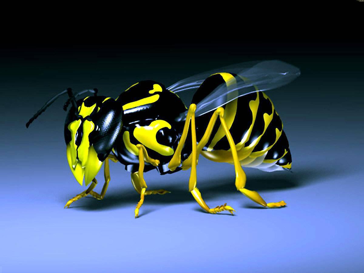 http://4.bp.blogspot.com/-Q8Nz-1uCyX0/T6GS2jc3xEI/AAAAAAAAHGU/3wfvv4yICG8/s1600/ou-are-viewing-the-3D-wallpaper-.jpg