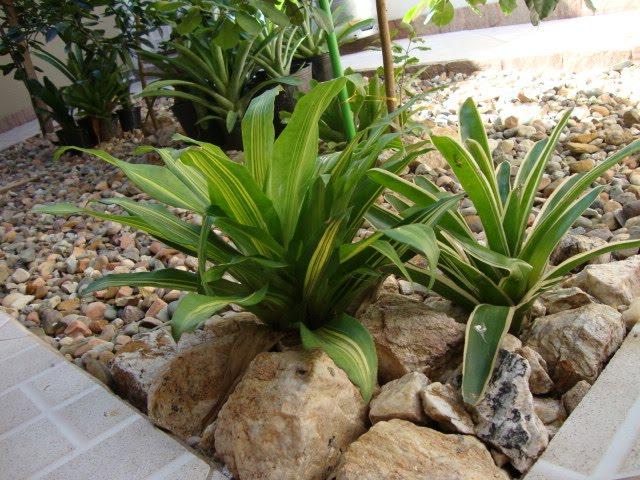 pedras jardim baratas : pedras jardim baratas:The Miss Reh: Seu Jardim Incrível!
