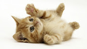 Cute Cat Awwwwww this is for all the cat lovers out there who think I am a . cute cat