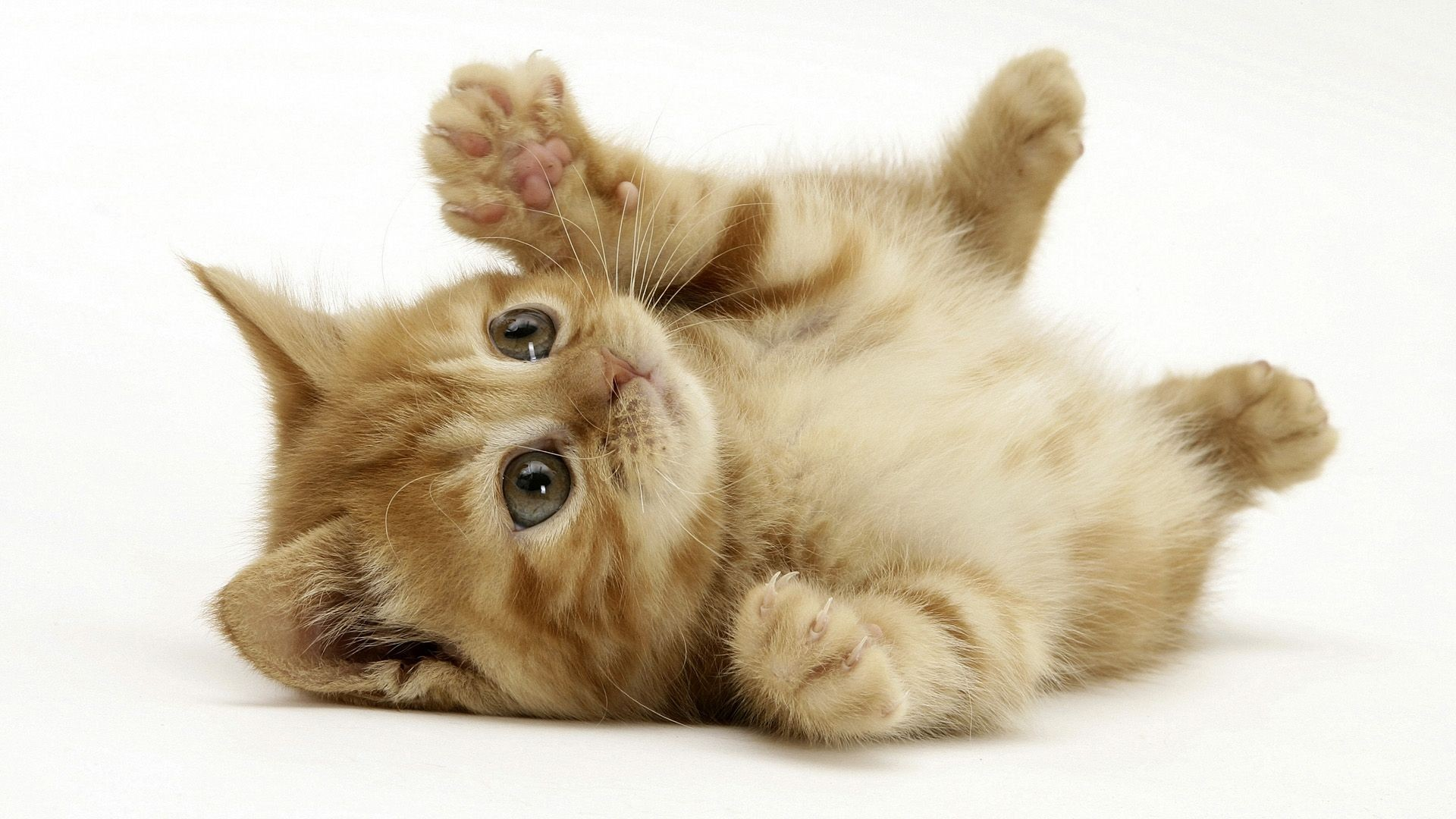 http://4.bp.blogspot.com/-Q8gBxP-bIWE/UIUQxrlWtVI/AAAAAAAAHqI/XB_lHiygXt4/s4000/cats_animals_little_kittens_kitten_kitty_cat_adorable_desktop_1920x1080_hd-wallpaper-782249.jpeg