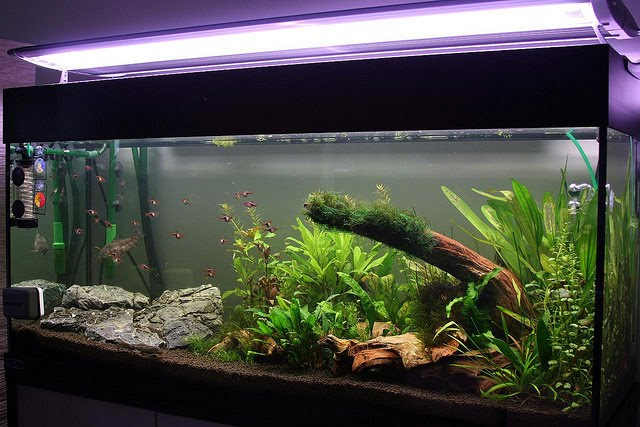 However the nature of aquarium plants related to the light intensity