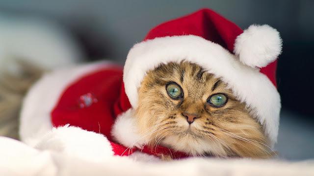 Cute Christmas Kitty