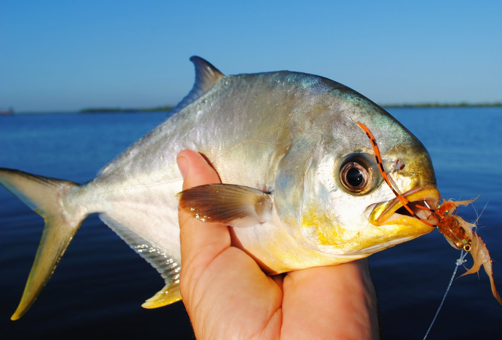 The pine island angler pompano on fly for Florida pompano fish