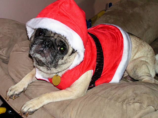 Santa, Pug