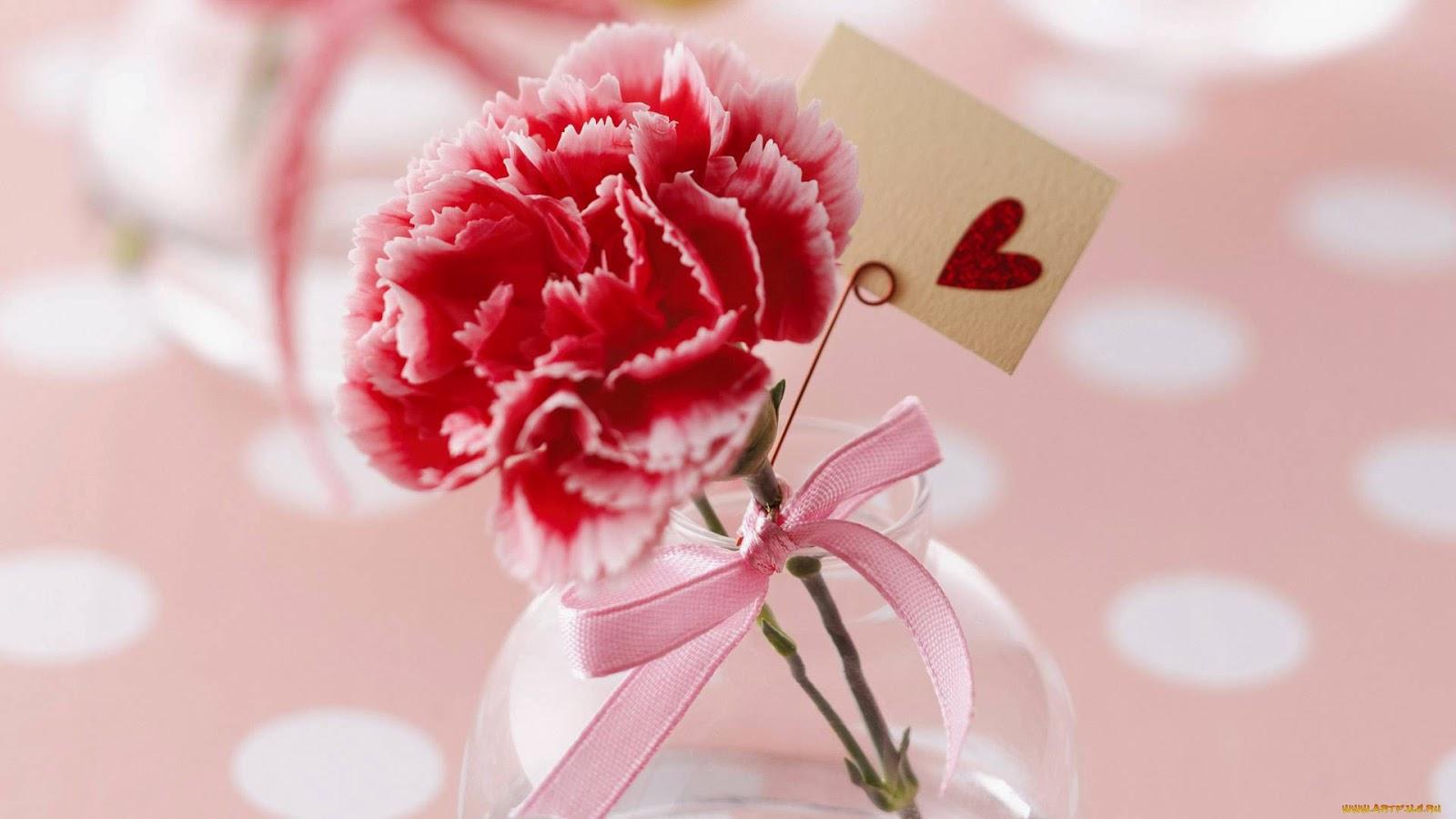 rosa e amor