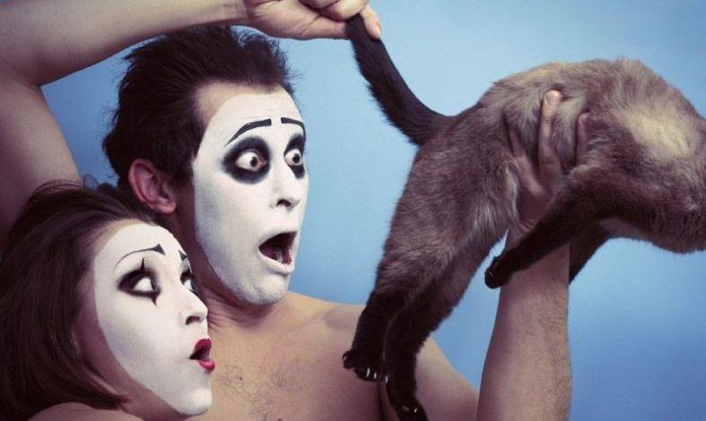 imagens humor, wtf lol, mimicos, cu do gato, essas imagens são reais?, eu adoro morar na internet