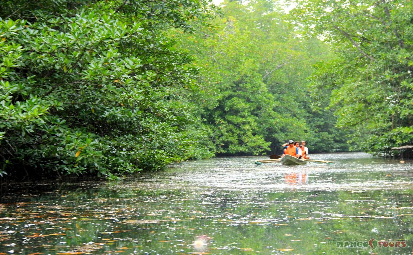 Mango Tours Puerto Princesa Palawan Mangrove Paddle Boat Tour