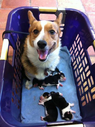 Mommy dog with little puppies