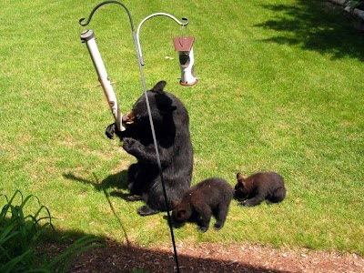 Spring weather has bears and other wildlife on the move
