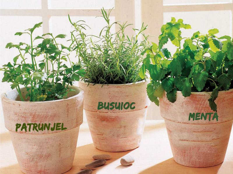 Cultivarea plantelor medicinale