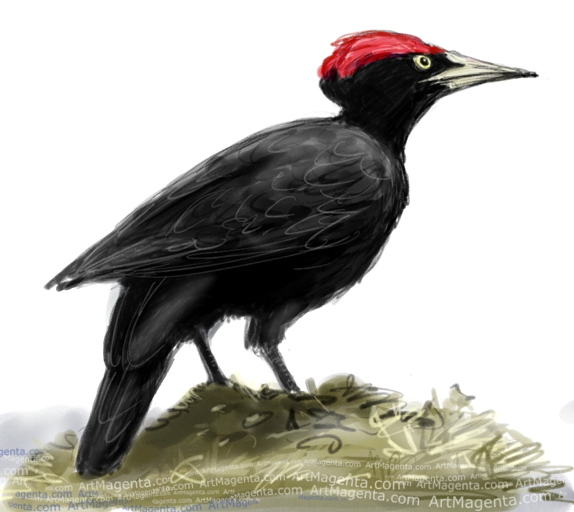En fågelmålning av en Spillkråka från Artmagentas svenska galleri om fåglar