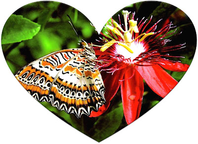 43_corazon_mariposa