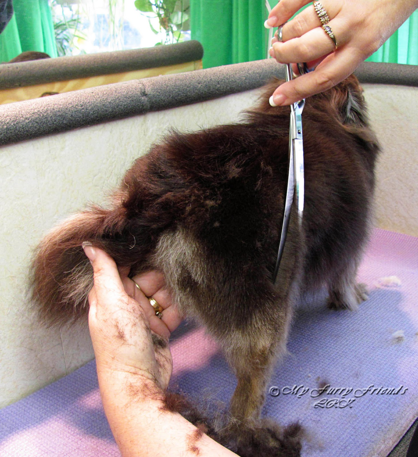 Pet Grooming: The Good, The Bad, & The Furry: Long Haired