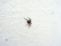 cerita semangat laba-laba