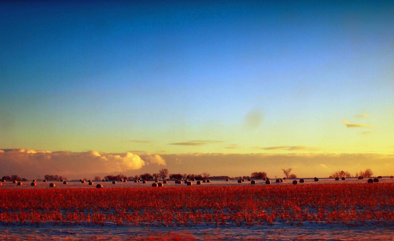 Farmland USA