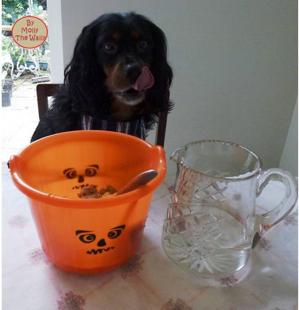 Molly The Wallys' Barking Bakes for Halloween 6