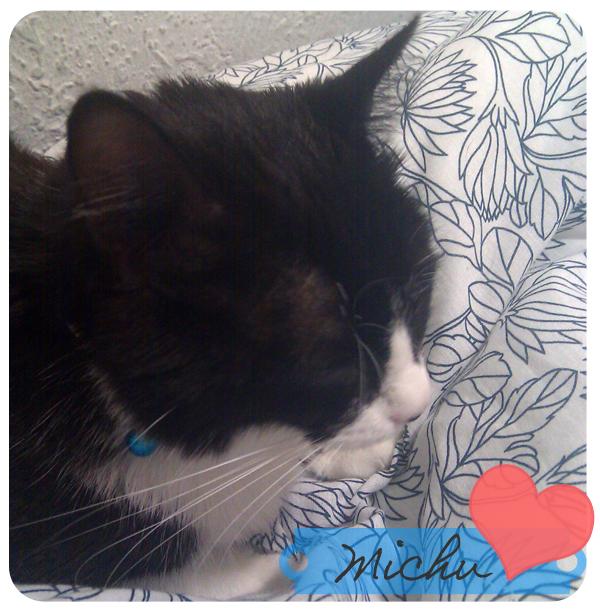 Michu, la gatita de mi chico