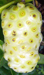Noni/ Indian Mulberry