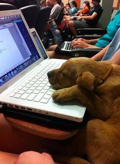 der Rest der Studenten schläft wie dieser süße hund.