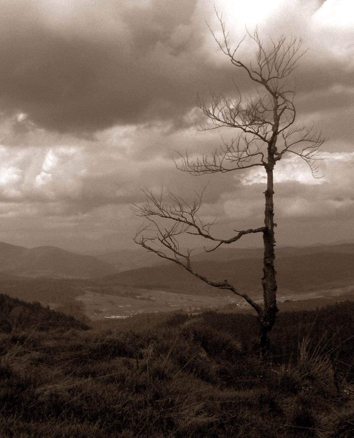 Неистовство карпатских гор. Пейзаж